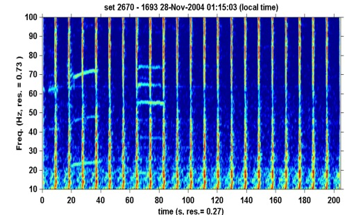 Blue whale call coinciding with seismic pulses